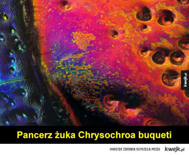 Ciekawe zdjęcia spod mikroskopu