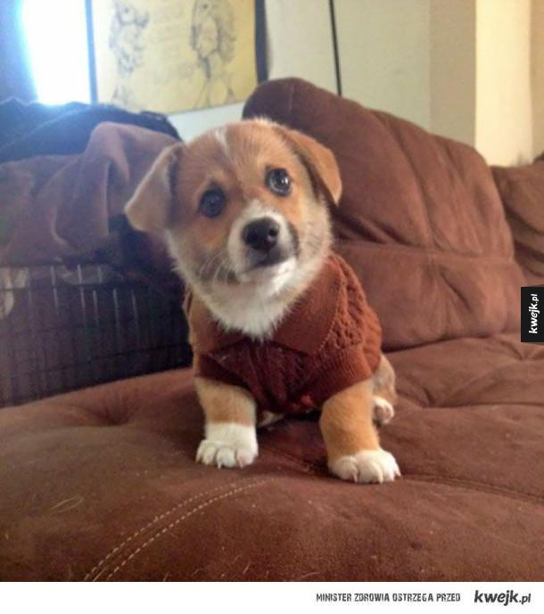 Zwierzaki w malutkich sweterkach