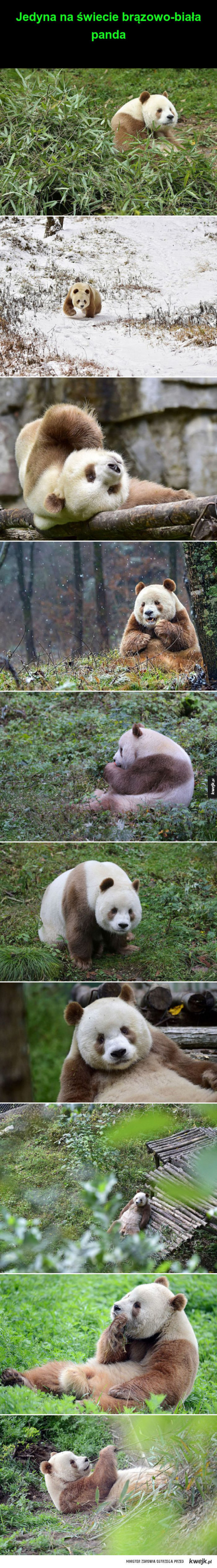 Śliczna Panda