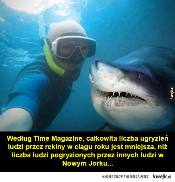 Ugryzienia rekinów i inne ciekawostki o zwierzętach