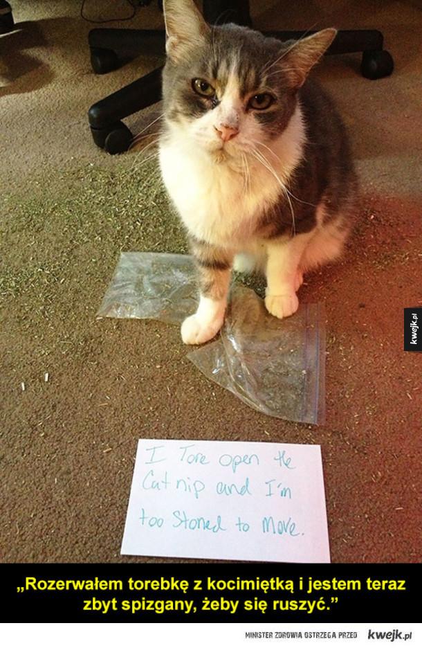 Zawstydzone koty