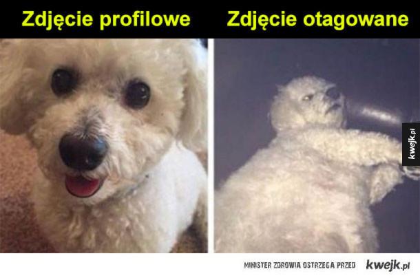 profilowe vs otagowane