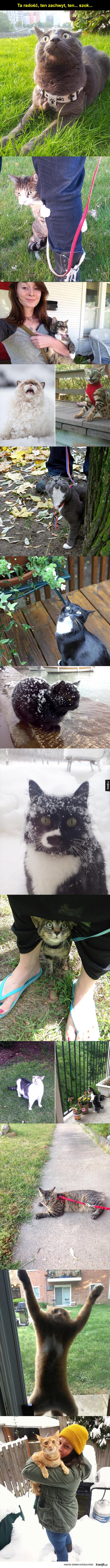 Koty, które po raz pierwszy ujrzały świat na zewnątrz