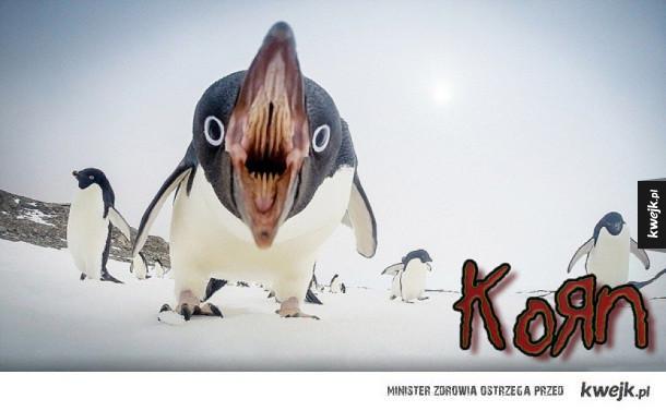 Nowa płyta Korn!