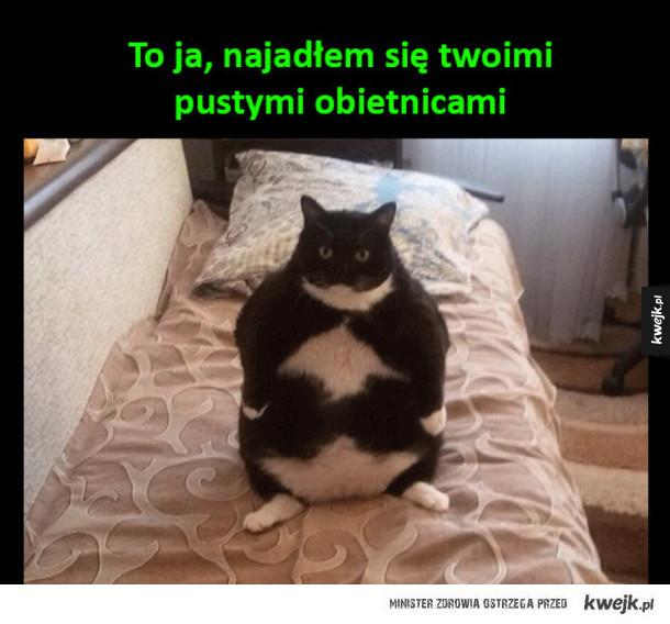 Bardzo gruby kot