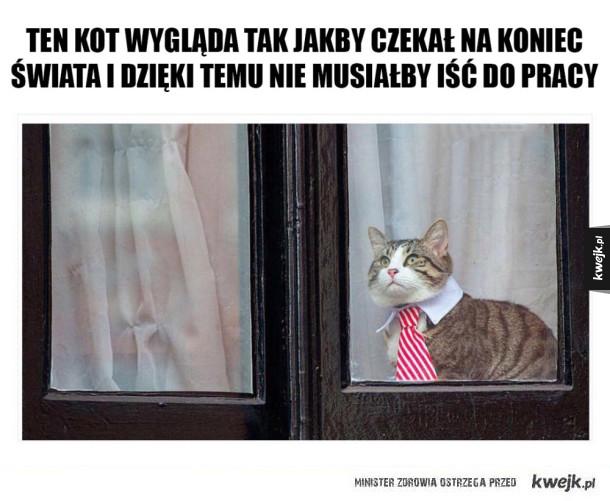 Kot z korporacji