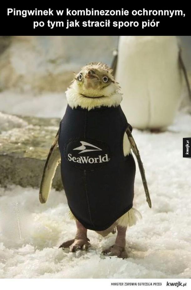 uszczęśliwiony mały pingwinek