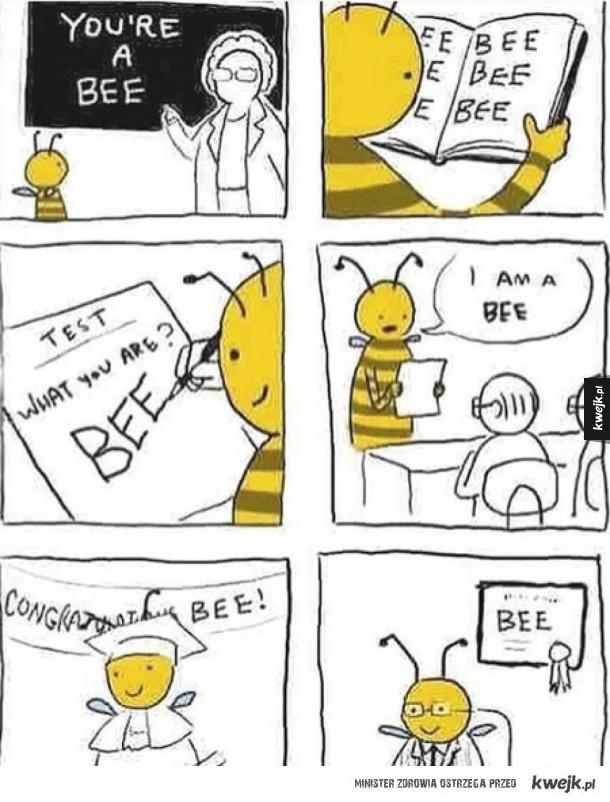 tak wygląda życie pszczoły