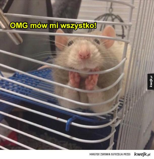 Najlepszy przyjaciel szczurek