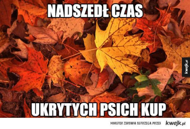 tyle liści w całym mieście
