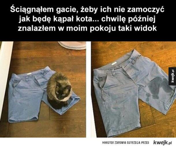 dzięki kochany koteczku