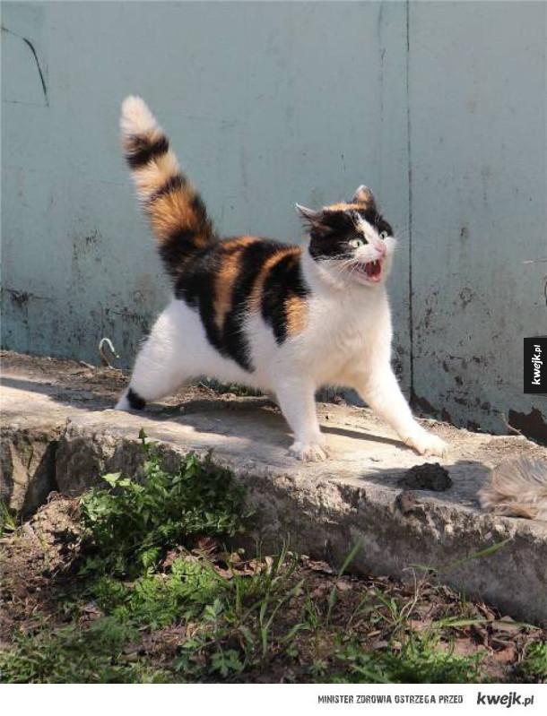 Zabawne koty na poprawę humoru