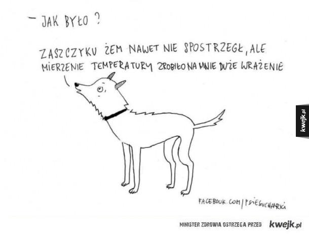 Pies o wizycie u weterynarza