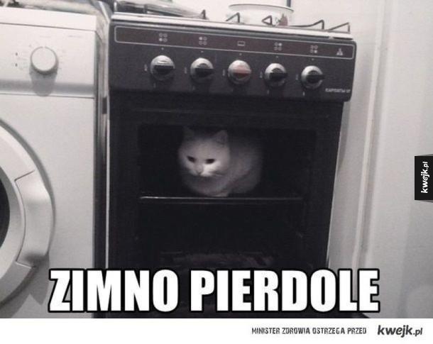 Koteł w piekarniku