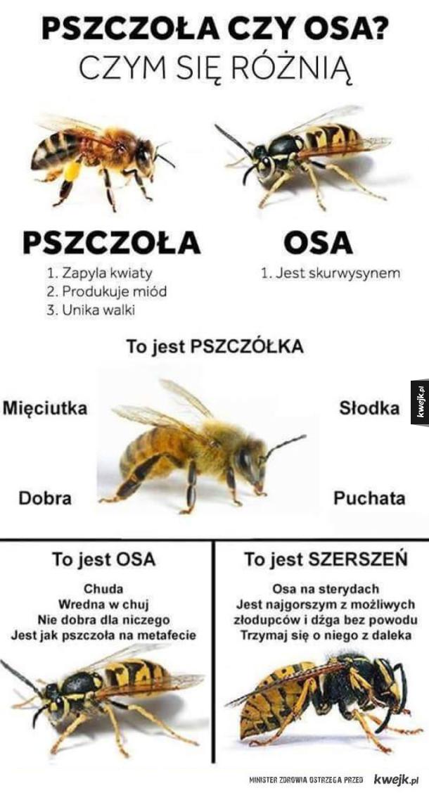 Pszczoła vs osa