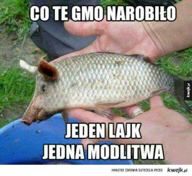 A wszyscy tak chwalili GMO, teraz ta ryba jest skrzywdzona. Smutne.