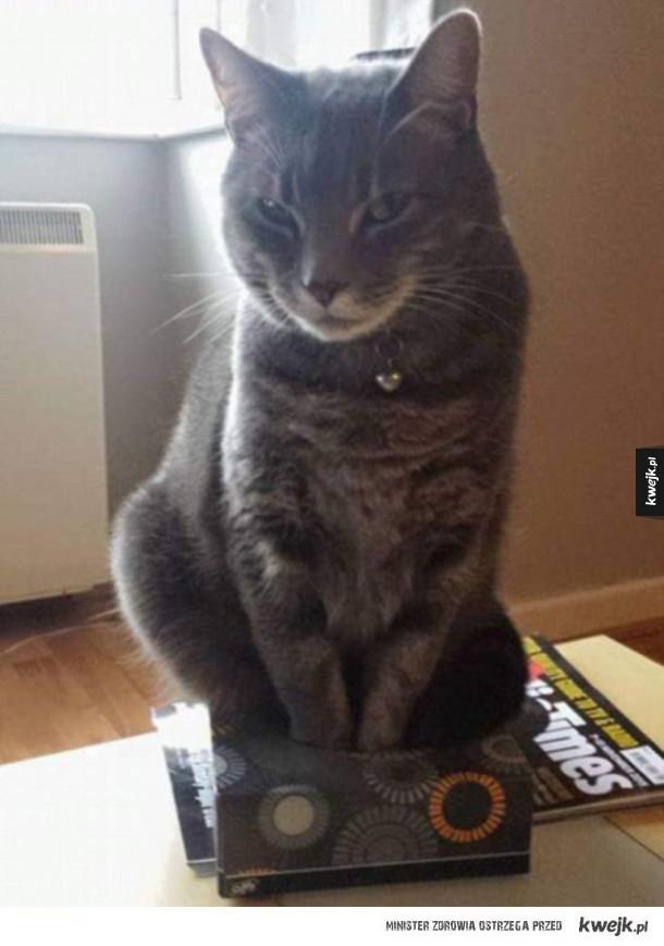 Koty w miejscach, w których czują się najlepiej