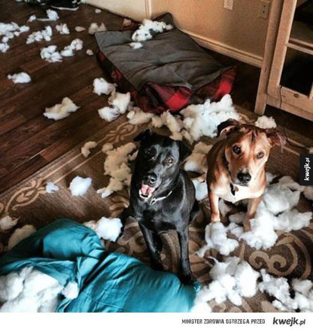 Psy i koty, które sieją zniszczenie