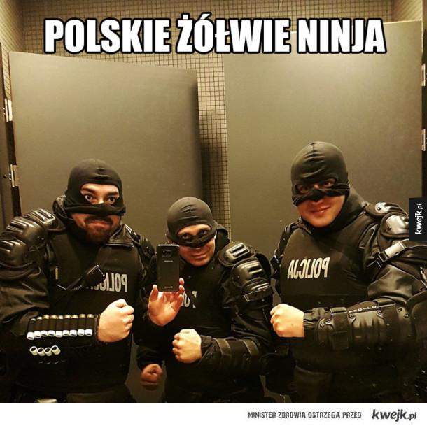 Polskie żółwie ninja