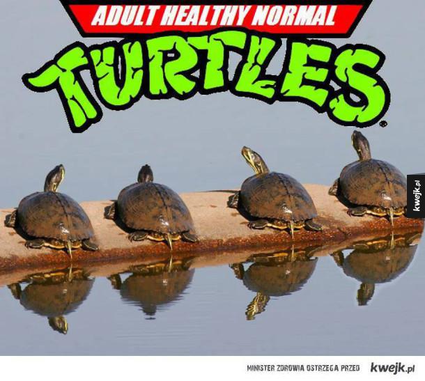 Normalne zdrowe dorosłe żółwie
