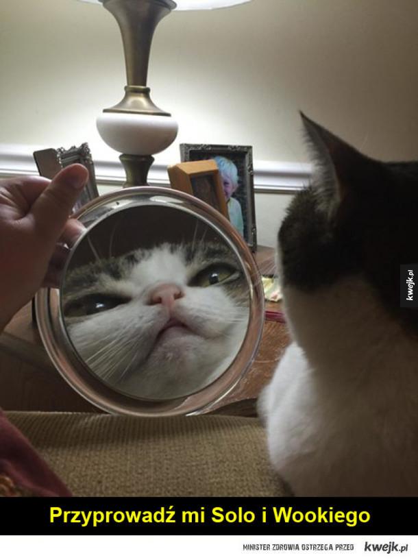 Koty i lustra to zabawne połączenie