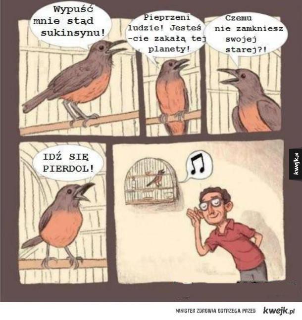piękny ptaków śpiew