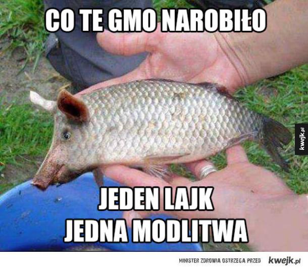 Takie są skutki GMO