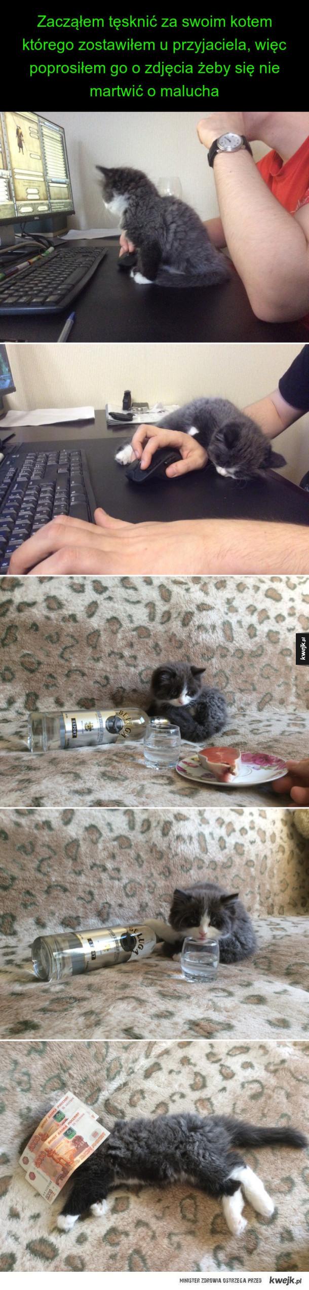 zostawiony kot u kolegi