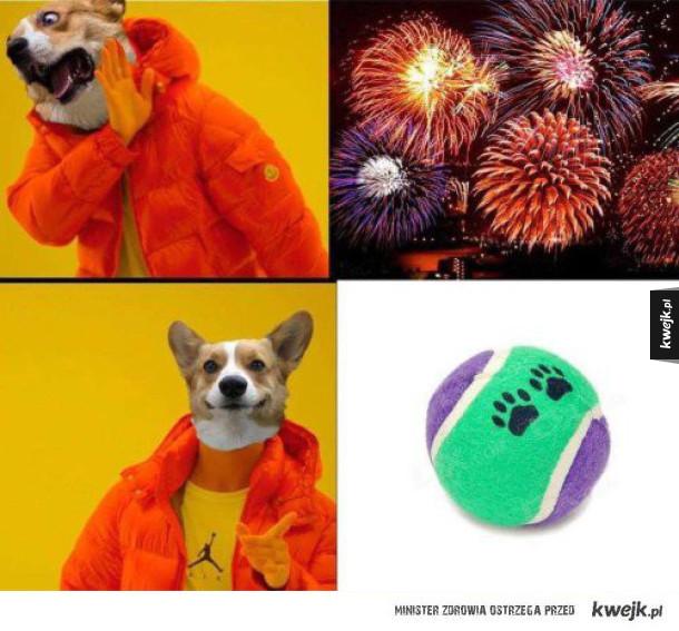 To co psy lubią najbardziej