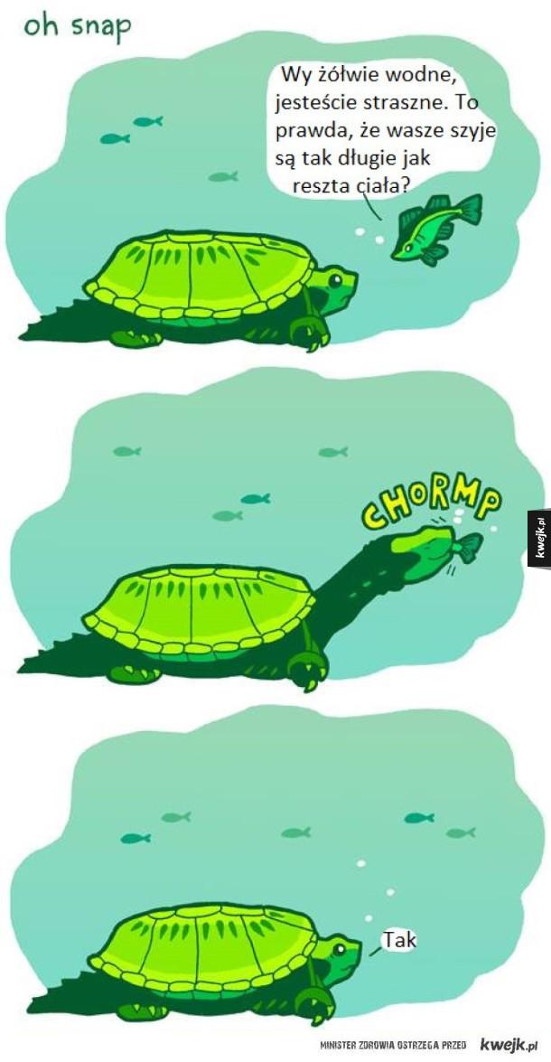 Żółwie wodne