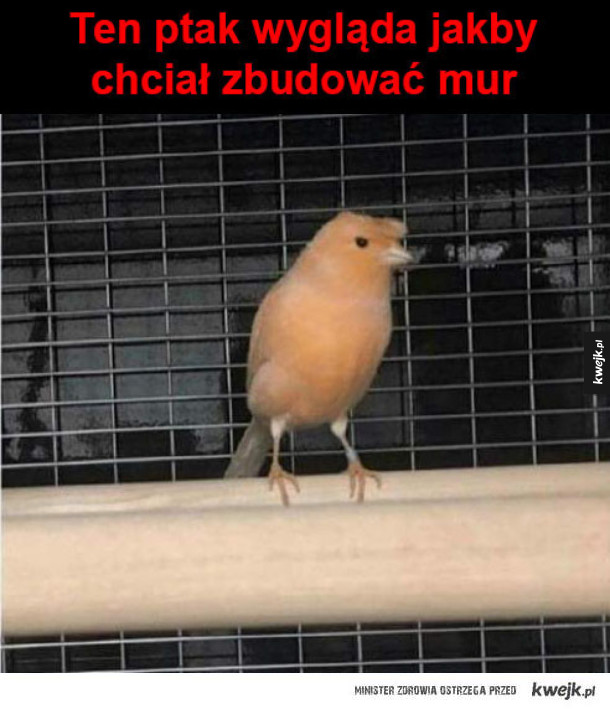 Ten ptak coś knuje