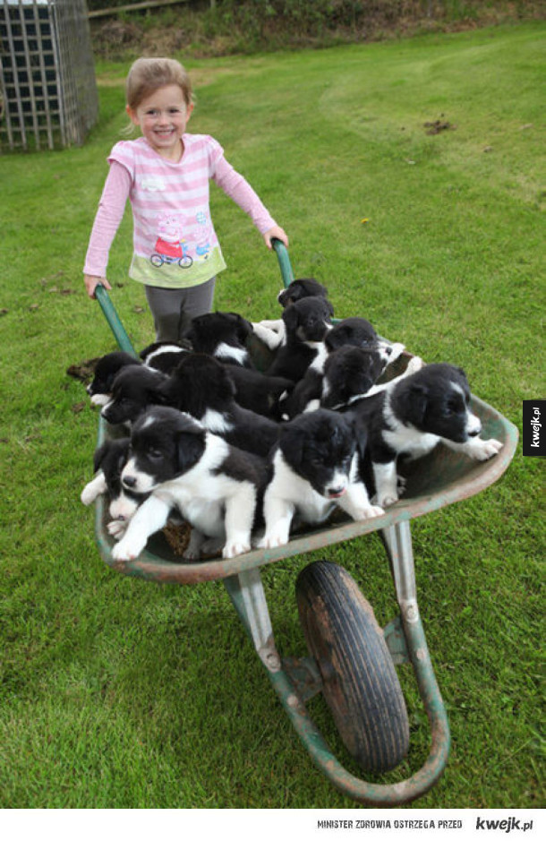 Duże ilości naraz psów (i kotów)