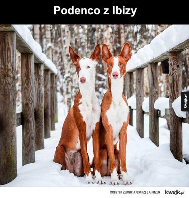 co za piękne psy