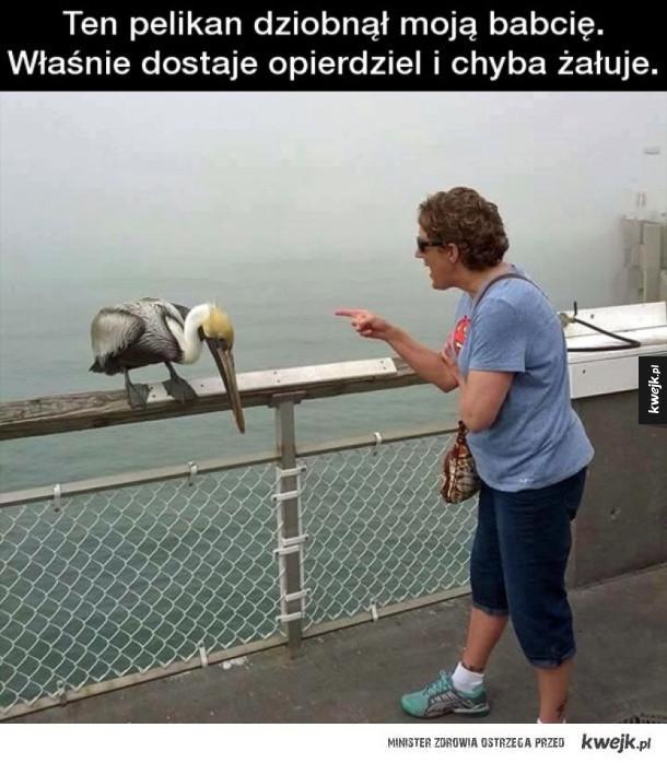 Niegrzeczny pelikan