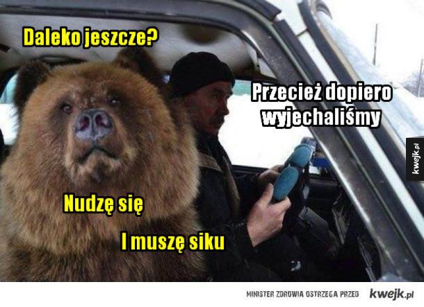 Niedźwiedź jedzie na wycieczke samochodem