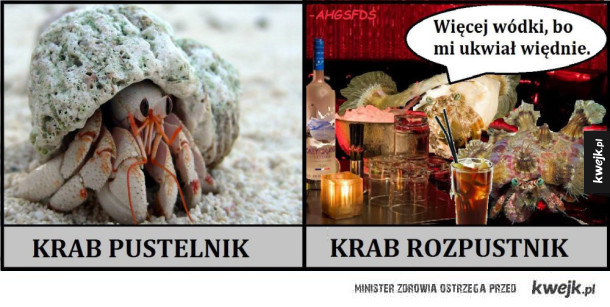 Krab pustelnik vs krab rozpustnik