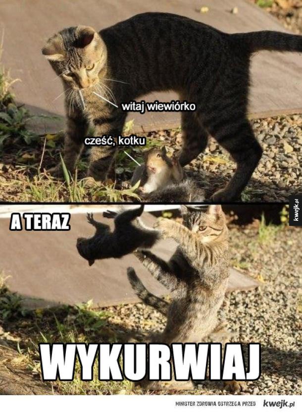 Kotek i wiewiór