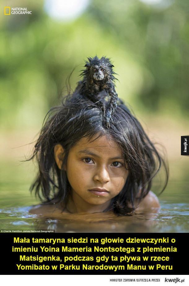 Wybór najlepszych zdjęć 2016 roku według National Geographic