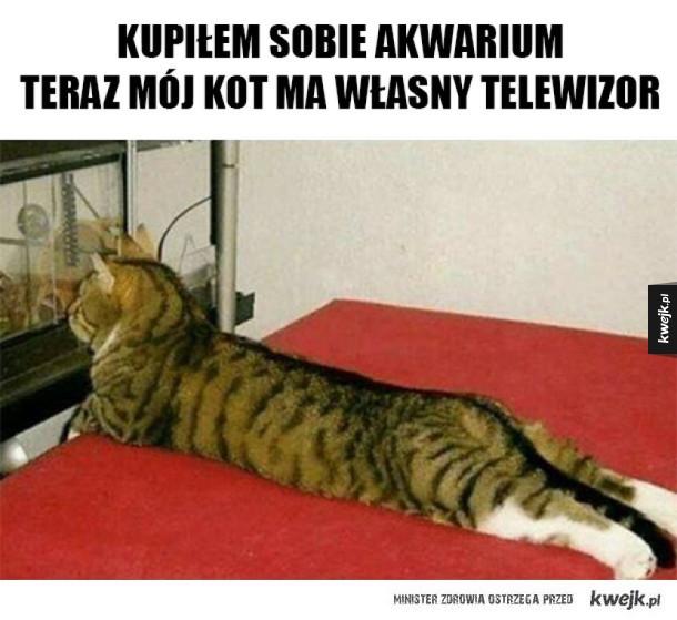 Telewizor dla kota