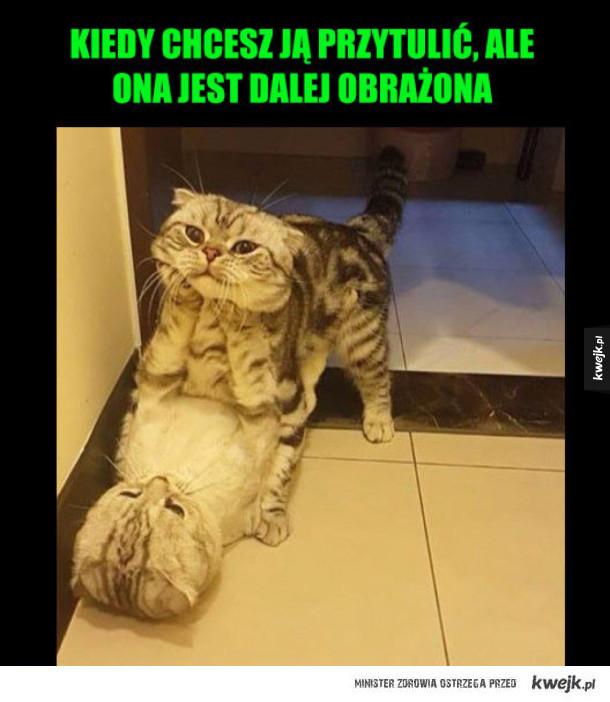 Kocie przytulanki