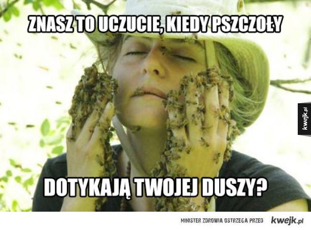 Poczuj te pszczoły
