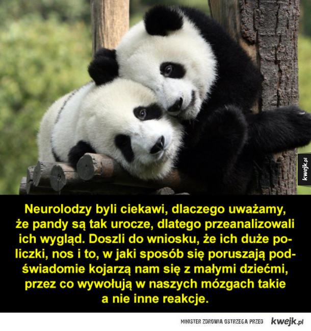 Niecodzienne odkrycia naukowców w sprawie zwierząt