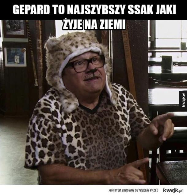 Gepard najszybszy ssak