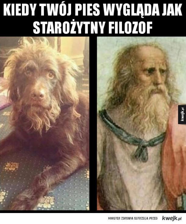 Pies filozof