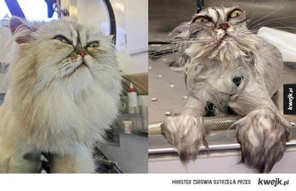 Zwierzaki przed kąpielą i po
