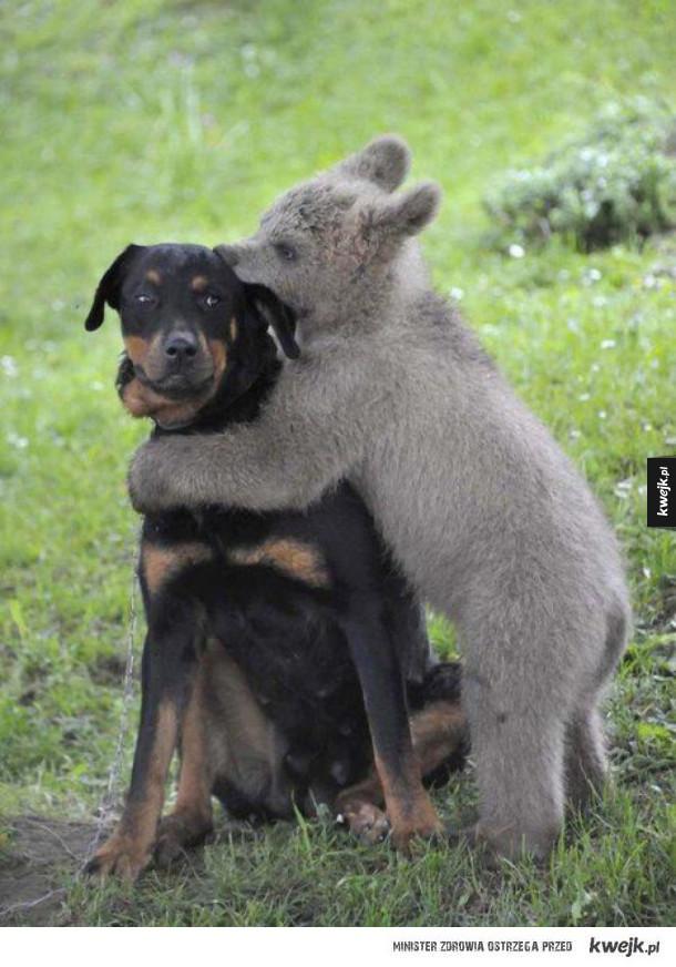 Międzygatunkowe przyjaźnie