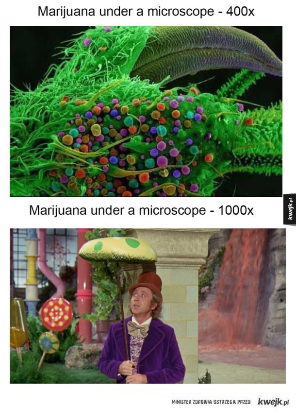 Marihuana pod mikroskopem
