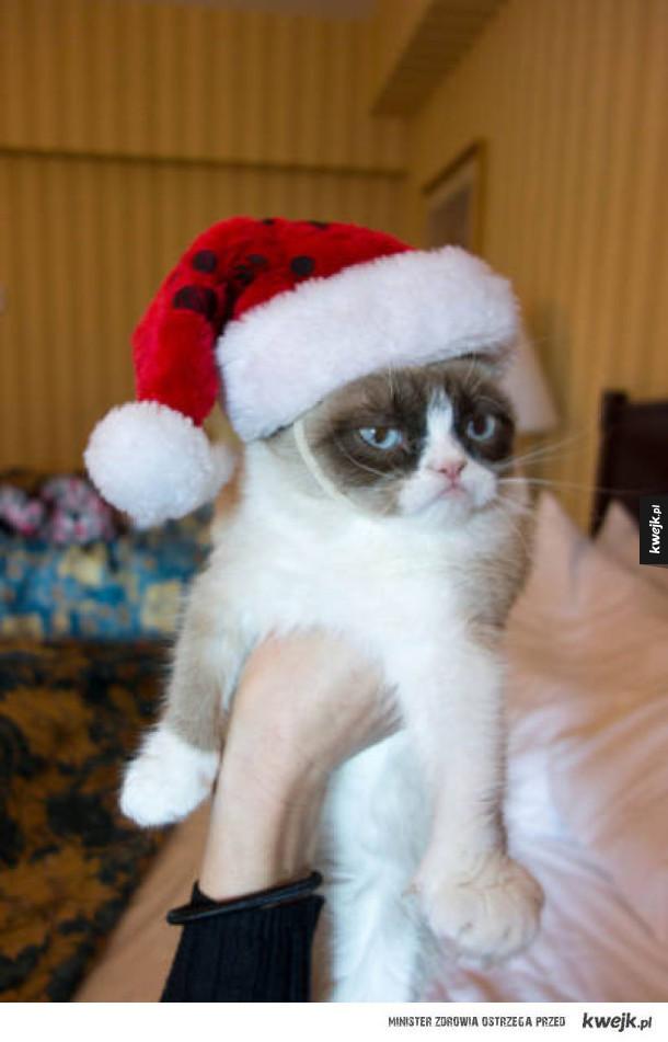 Te zwierzaki zdecydowanie nie przepadają za Świętami
