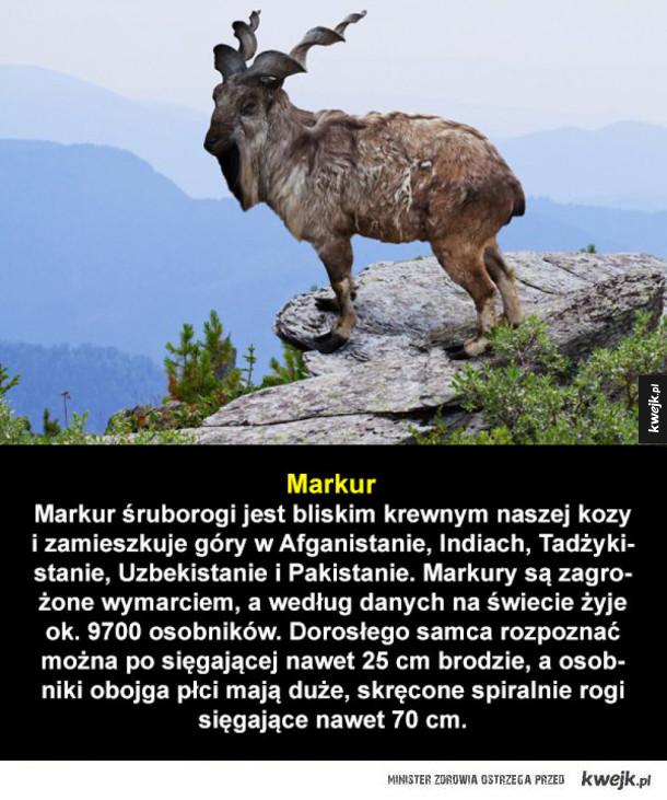 Niezwykłe zwierzęta, które są zagrożone wyginięciem