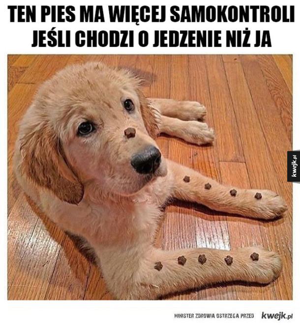 Ten pies jest niebywały